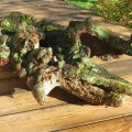 Zen Landscape Sculptural Wood image 4